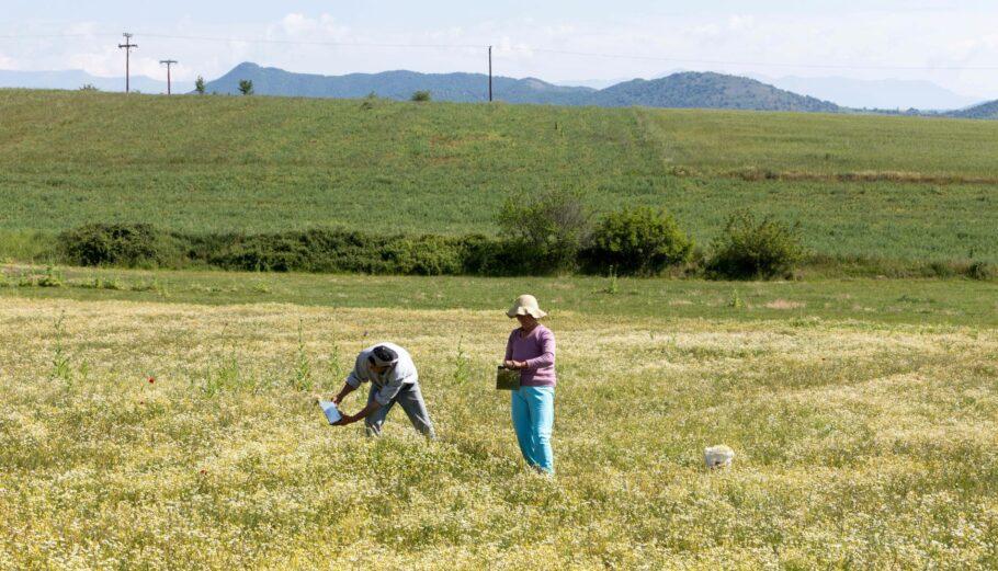 Αγρότες @Eurokinissi